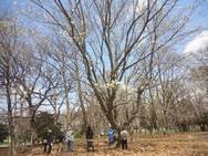 『次は、木にしよう!』という現場会議。