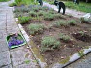 お花を楽しむ為に一部は残して。それでも大収穫!!