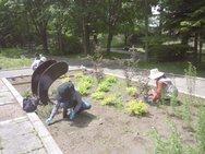 本日はメンテナンス!という名の雑草掃除の日です。