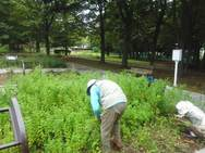 早速はじめています、収穫作業!!