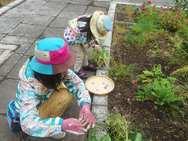こちらはボリジの花を摘んでいます✿