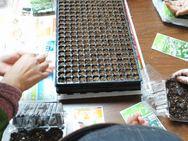 ちいさな種は小さなプラグトレイに蒔きます!