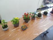 盆栽と、講座後半『コケ玉つくり』の見本作品です。