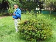 実際の公園の低木も使って刈込について解説します。