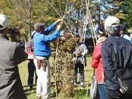 竹(支柱)の立て方とまとめ方。