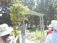 本日の男性参加者、高身長を活かしホップを収穫してくれました!!!