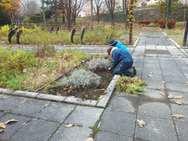 中央通路部に植えた1年草も片付けます。