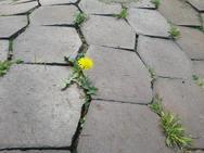 次回、5月は苗植えです♪ (小さな春見つけたww)