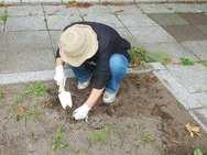 土はふかふかですが、代わりに細かい雑草が…