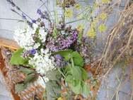 花々を収穫して(野性味溢れる?)ミニブーケをお持ち帰りです♪