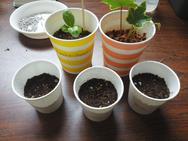 水と温度、芽が出たら風と太陽。植物は正直ですね☆