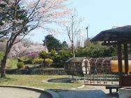 恵庭ふるさと公園<サクラ/ツツジ/レンギョウ>19/05/04
