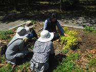 5月! 低木と宿根草の移植をします!