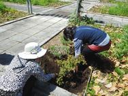 根の位置や根の状態、土の残す量などポイントがありますね☆