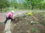 植えた周りの土もほぐして柔らかく。空気を含んであげました。